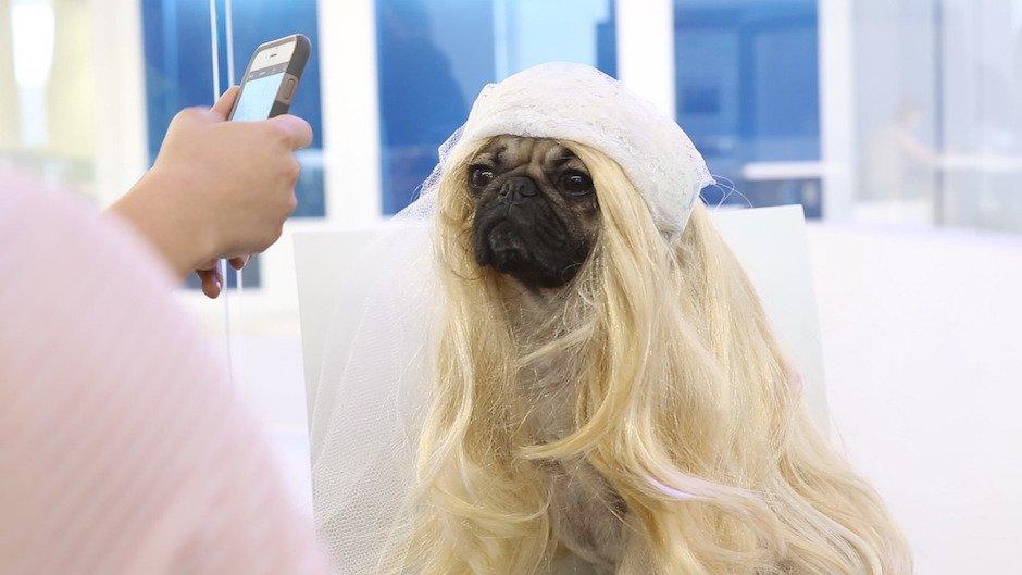 BTS of Doug the Pug's Kim Kardashian Photoshoot: Warum ein Mops besser ist als Möpse