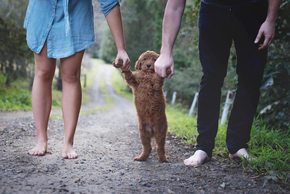 Neugeborenen Fotoshooting mit Hundewelpe Humphry: Die Antwort auf Fragen wann Nachwuchs geplant ist