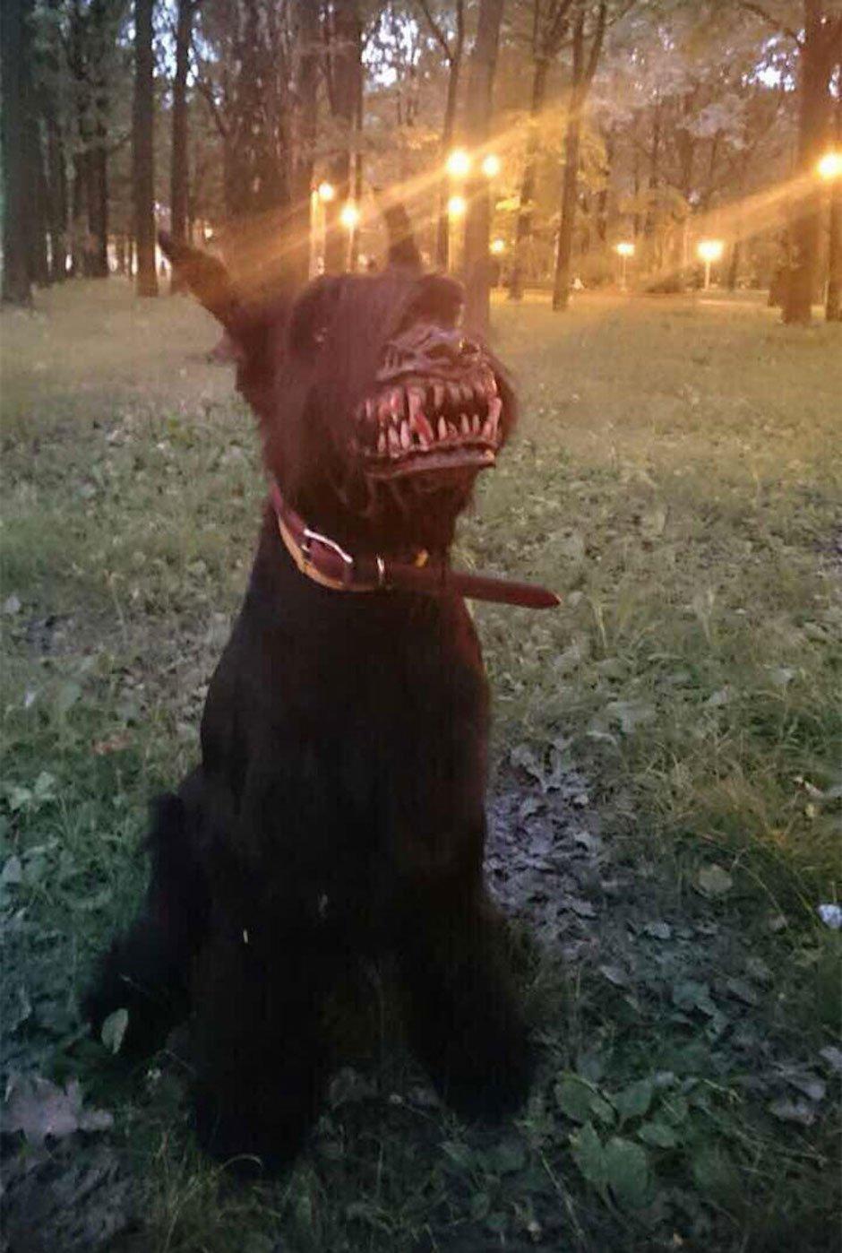 russian-werewolf-dog-muzzle-werwolf-maulkorb-hund
