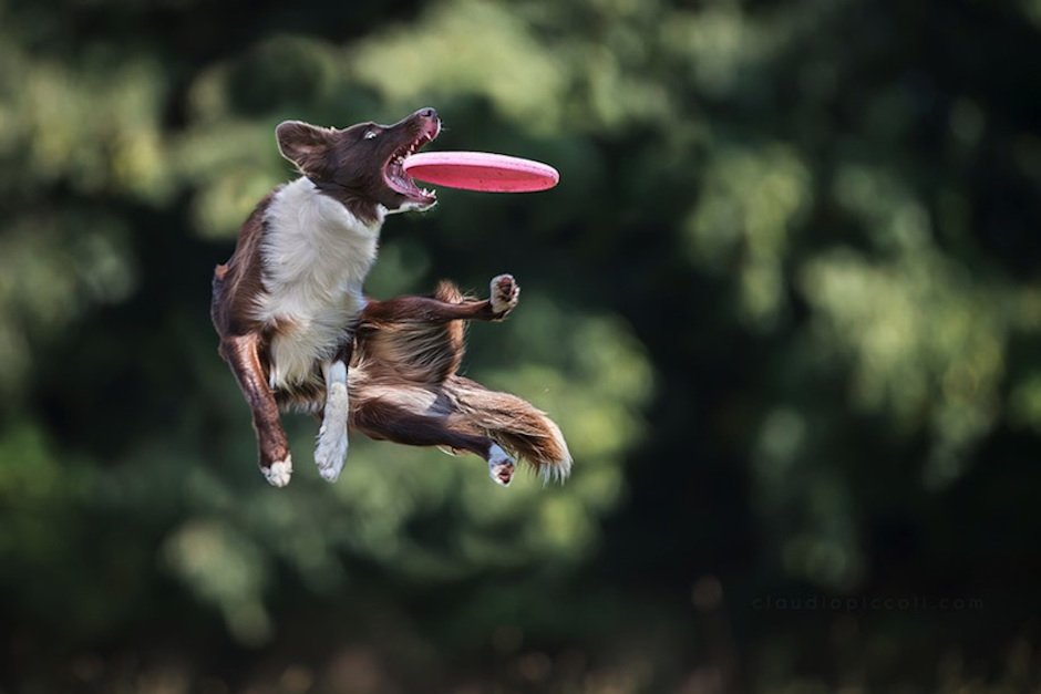 Dogs-Can-Fly-Claudio-Piccoli-03
