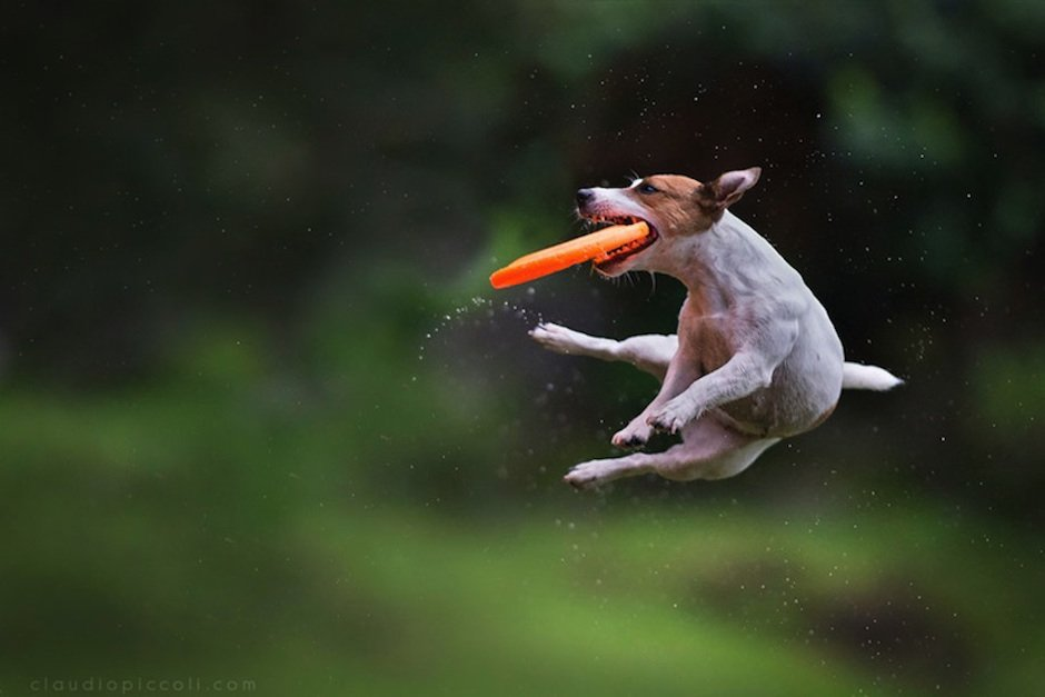 Dogs-Can-Fly-Claudio-Piccoli-04