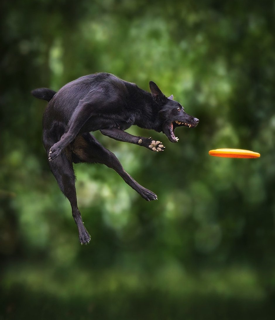 Dogs-Can-Fly-Claudio-Piccoli-06