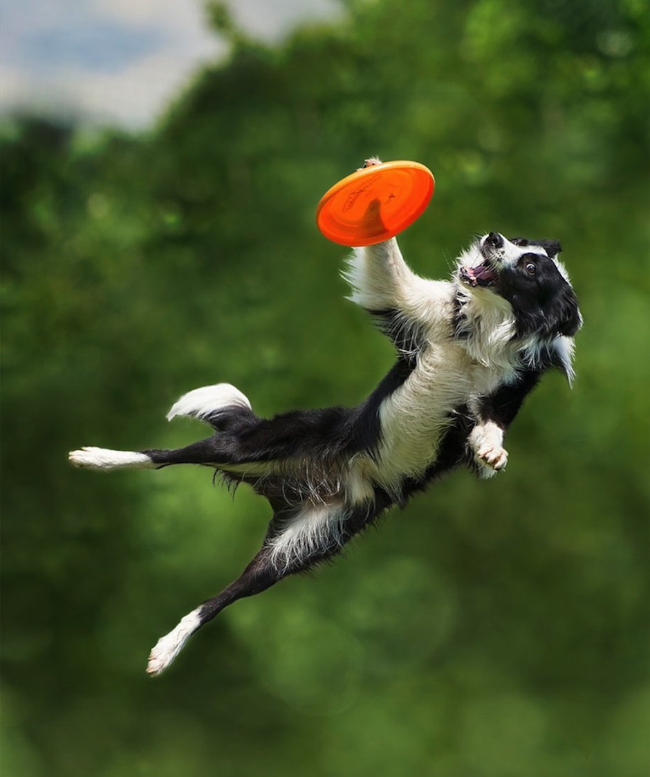 Dogs-Can-Fly-Claudio-Piccoli-07