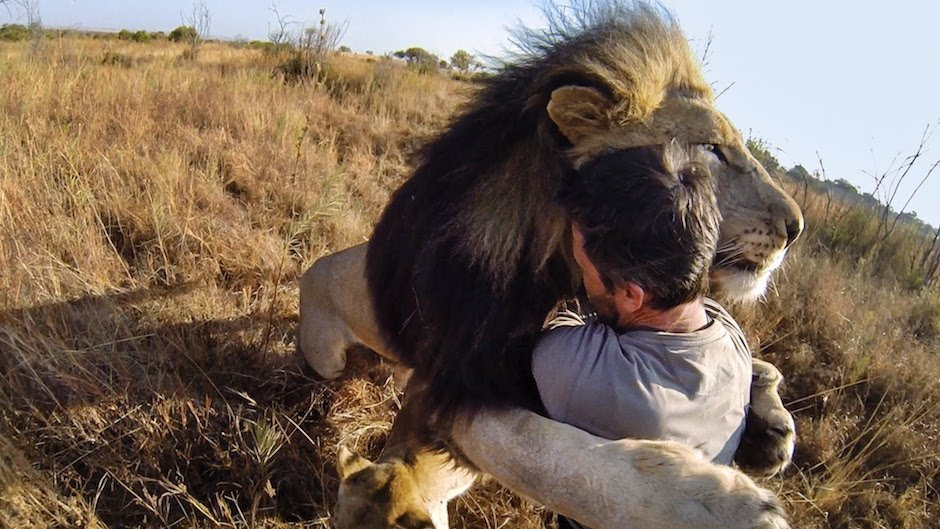 Kevin Richardson's Leidenschaft für Löwen und den Artenschutz kennt keine Grenzen