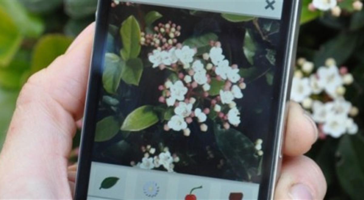 PlantNet: Diese App erkennt jede Pflanze anhand eines Bild
