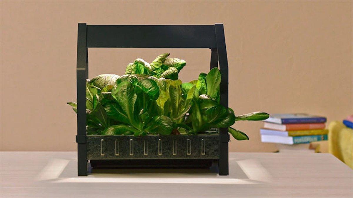 Indoor-Gartenkit: IKEA will mit KRYDDA und VÄXER Hydrokulturen in jeden Haushalt bringen