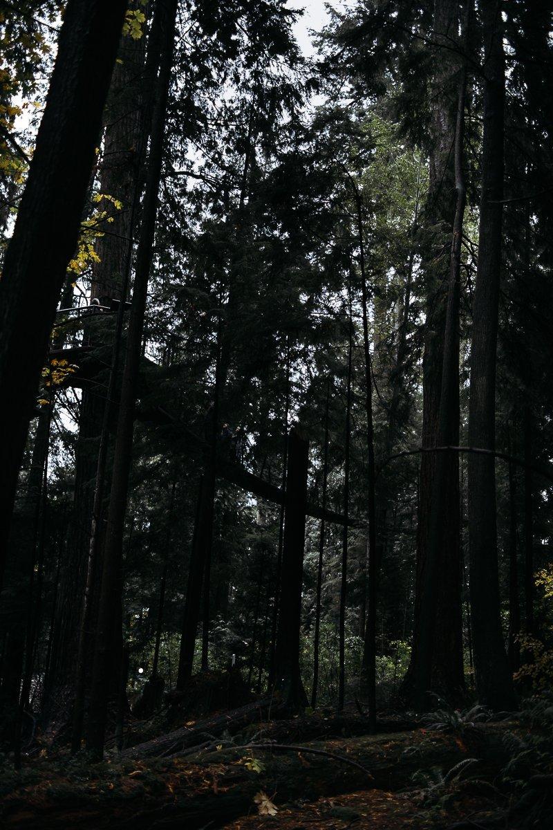 Capilano Suspension Bridge Park Douglasfichten Wald Wandern Hiking Pfad Natur pur Kanada Vancouver British Columbia