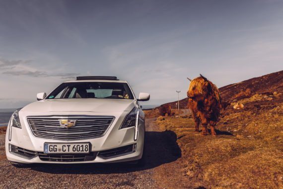 Highland Cattle Applecross Pass Cadillac CT6 White