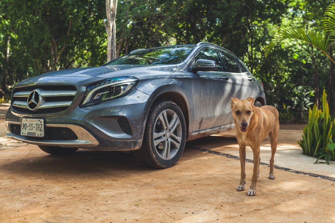Mercedes-Benz GLA200 im Urwald mit Hund