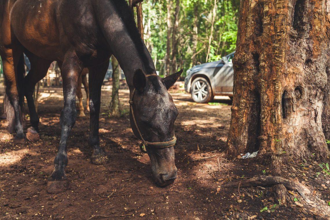 Pferd im Urwald mit Mercedes-Benz GLA200 im Hintergrund