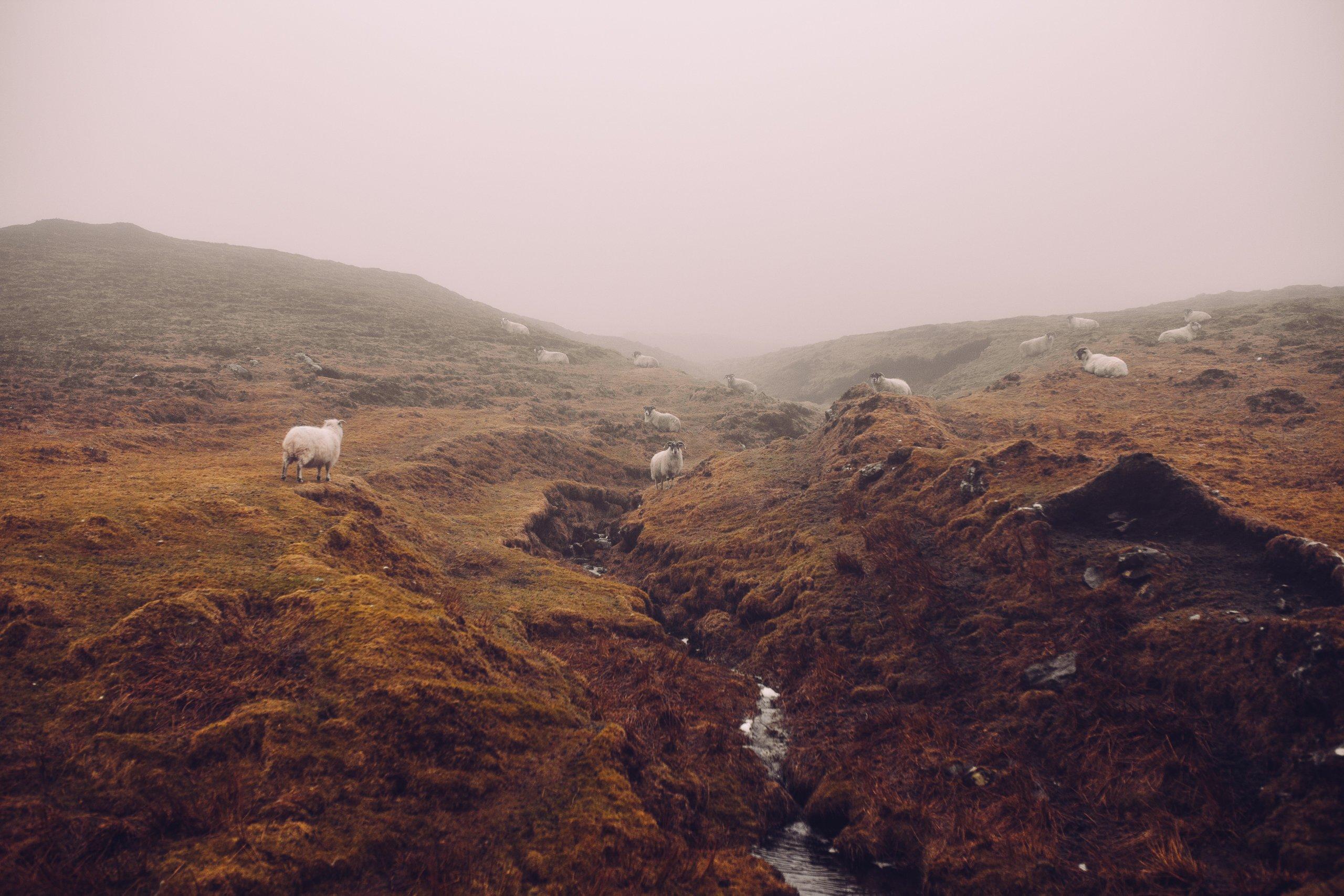 Schafe Landschaft Bach Wasserfall Nebel