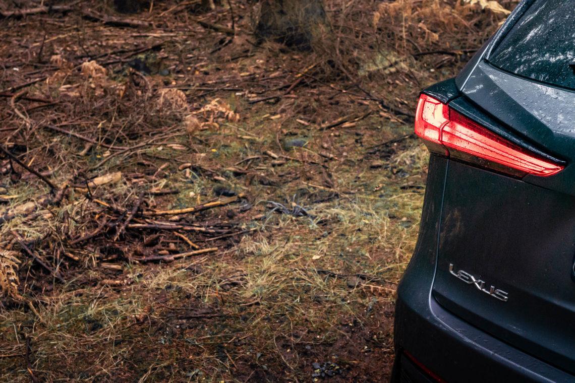 Rücklicht Lexus im Wald