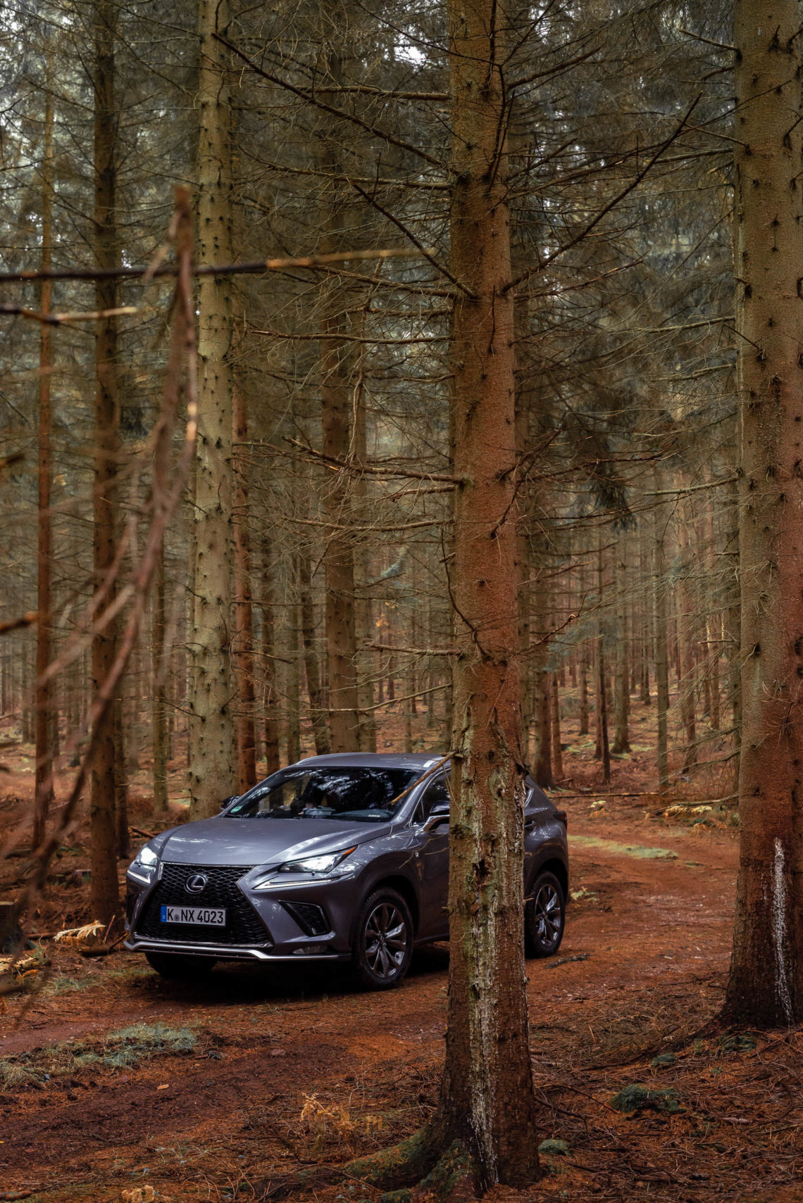 Lexus NX F-Sport Hybrid im Wald